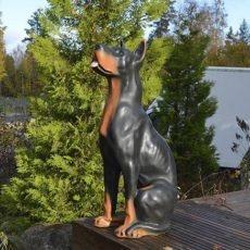 Dobermann Istumassa koirapatsas, kuvattu läheltä