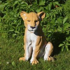 Leijonapatsas, kaunis pentu