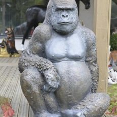 Gorillapatsas, kuvattu edestä