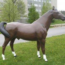 Hevospatsas, aidon kokoinen ruskea hevonen