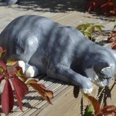 Kissapatsas, kurkisteleva kissa