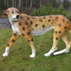 Gepardipatsas