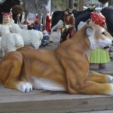Leijonapatsas, isokokoinen